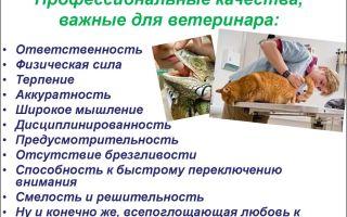 Ветеринарный врач. профессия врач. обязанности ветеринара